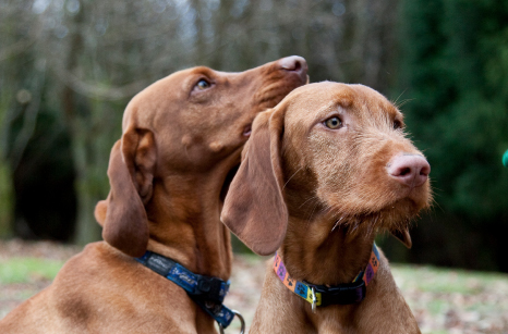 General Image - Brown Dogs