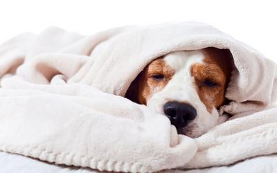 image for Canine Influenza Virus – Update